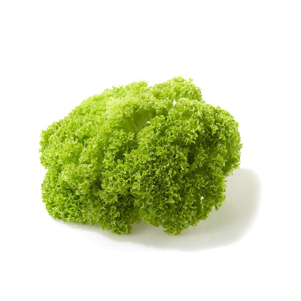 salata-lollo-bionda